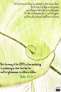 Psalms 103:14-17