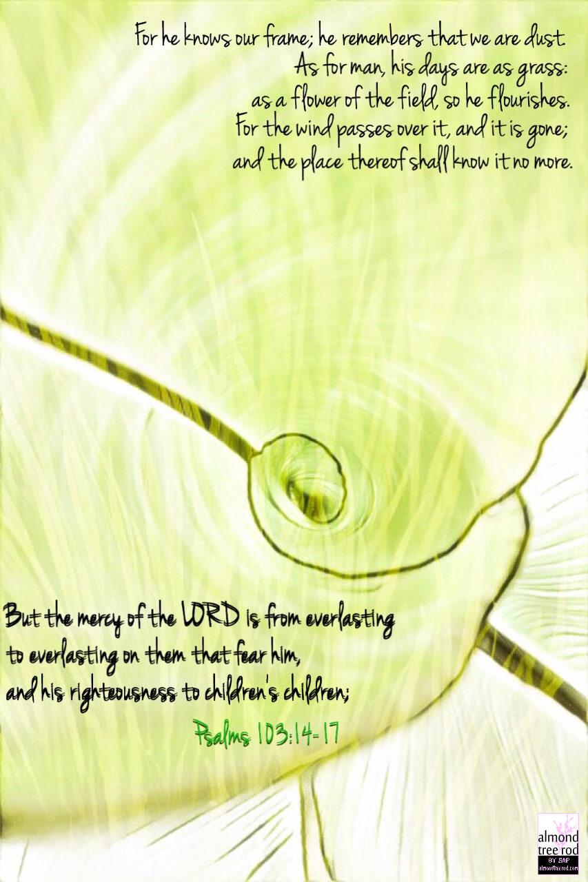 Psalms:103-14-17